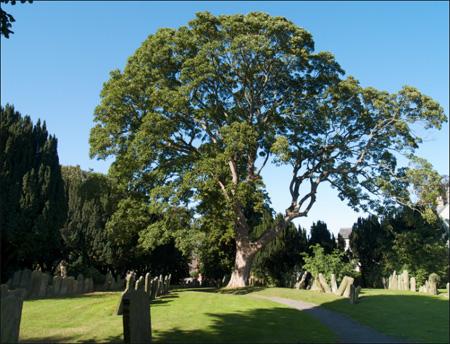 Cemetery Swaffham