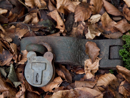 Forest Floor Lock